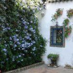цветы у домов