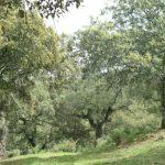 парк Доньяна
