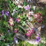 Весна в Пиренеях